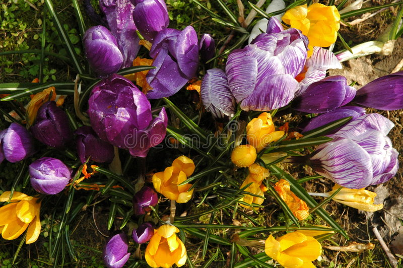 Download Spring flowers stock image. Image of wild, yellow, march - 84689