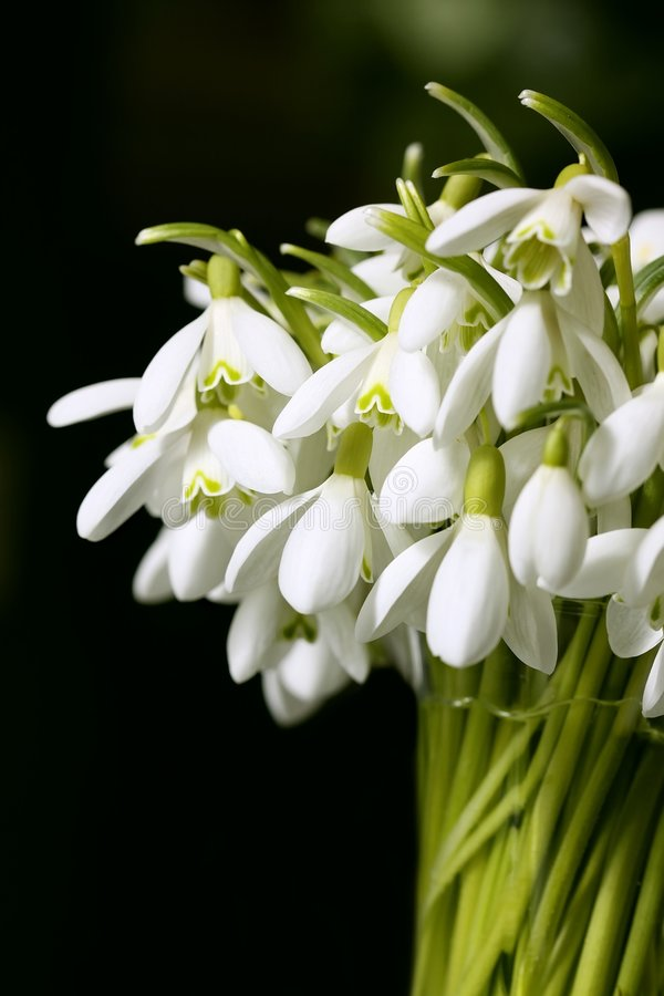 Download Spring Flowers Royalty Free Stock Images - Image: 8680119