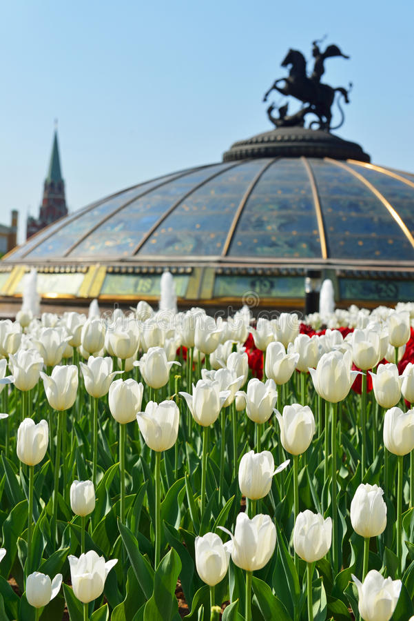 Spring. Flowers in Alexander Garden (focus on white flowers). Moscow, Russia royalty free stock image