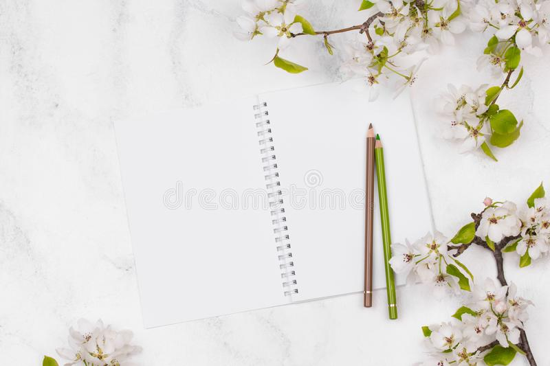 Spring flowers. Apple tree blossom with green leaves on white background royalty free stock photos