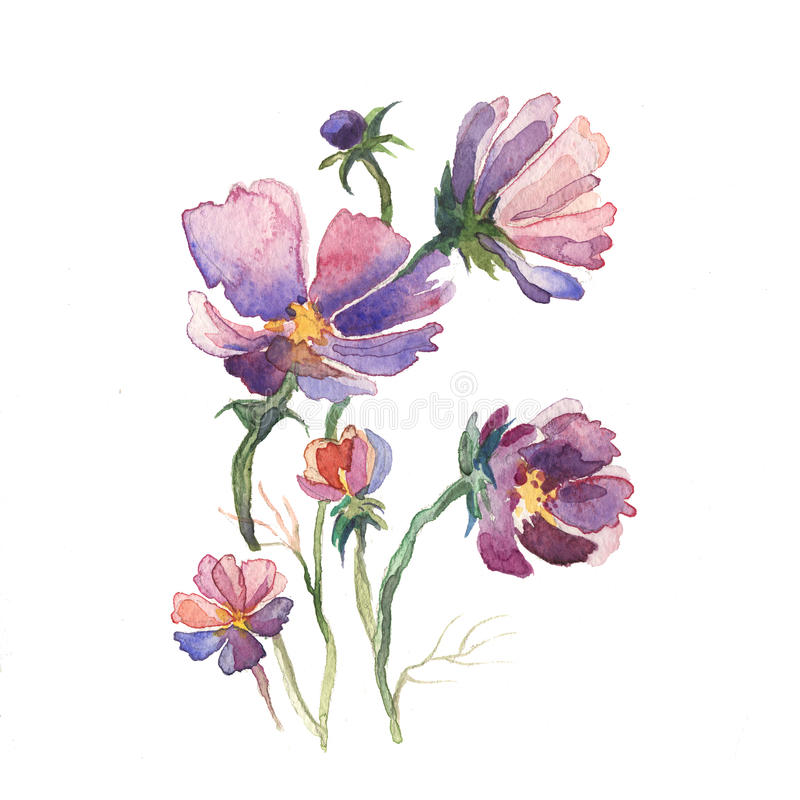 The spring flowers aster painting watercolor stock illustration