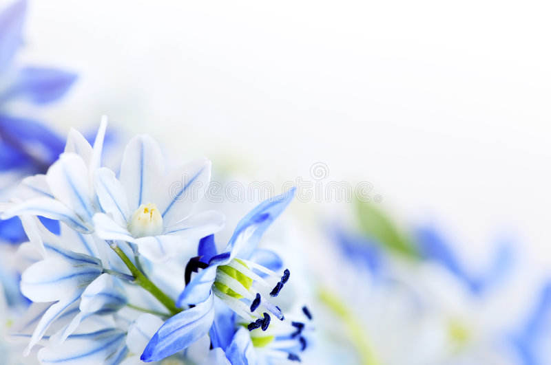 Spring flowers background stock photo image of close 7571914 spring flowers background mightylinksfo