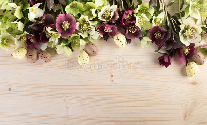 Spring flowers background with Easter decoration pastel color. Lenten roses over light wood text space stock photography