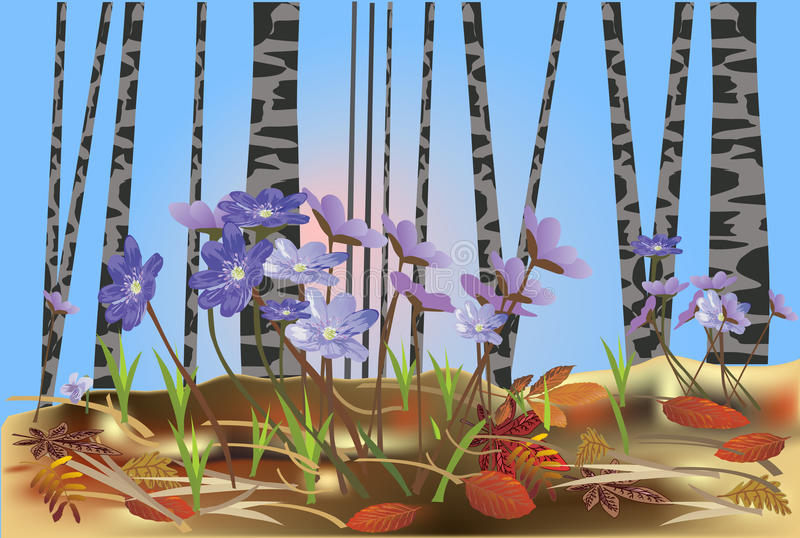 Download Spring Flowers In Birch Forest Illustration Stock Vector - Image: 18393573
