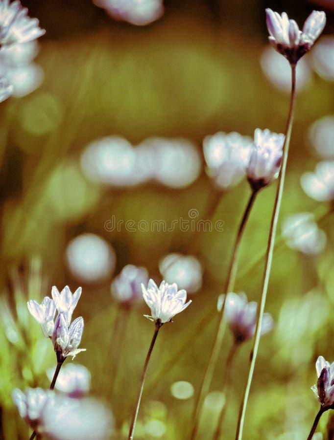 Spring flowers in bloom stock photo