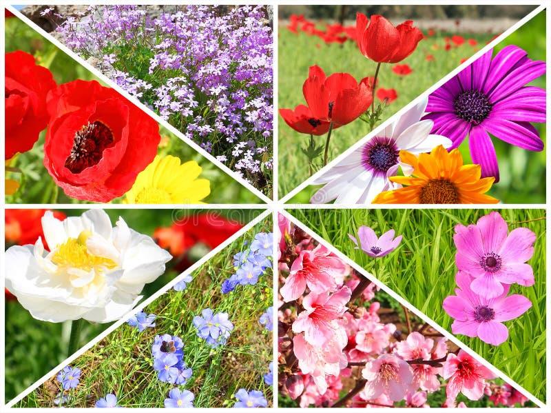 Spring flowers blossom stock photos