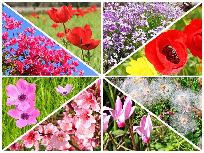 Spring flowers blossom stock image