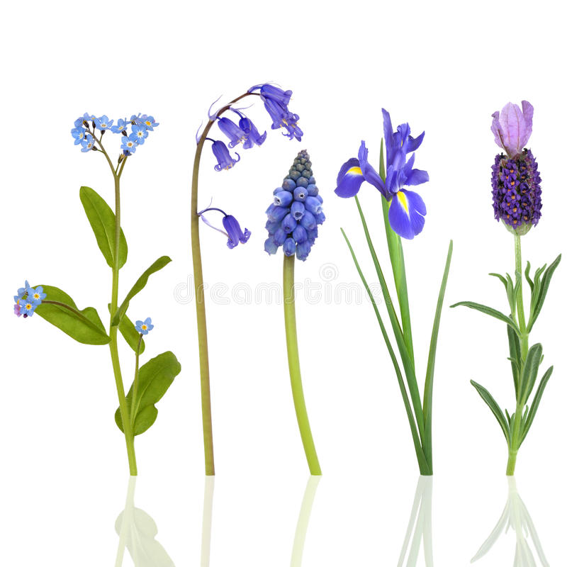Spring Flowers in Blue. Selection of blue flowers in spring, isolated over white background with reflection royalty free stock images