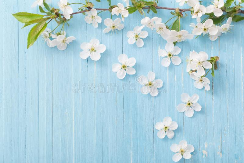 spring flowers on blue background stock photos