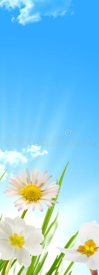 Spring flowers blue sky and sun background royalty free stock photos
