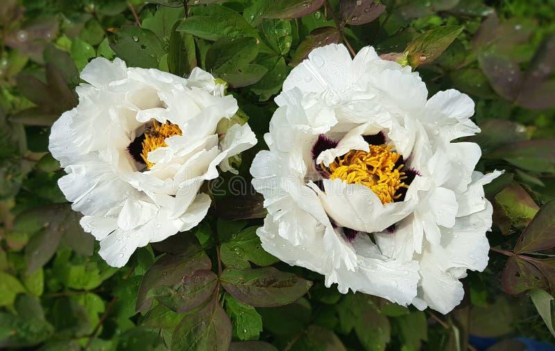 Spring flowers in botanical garden stock photos