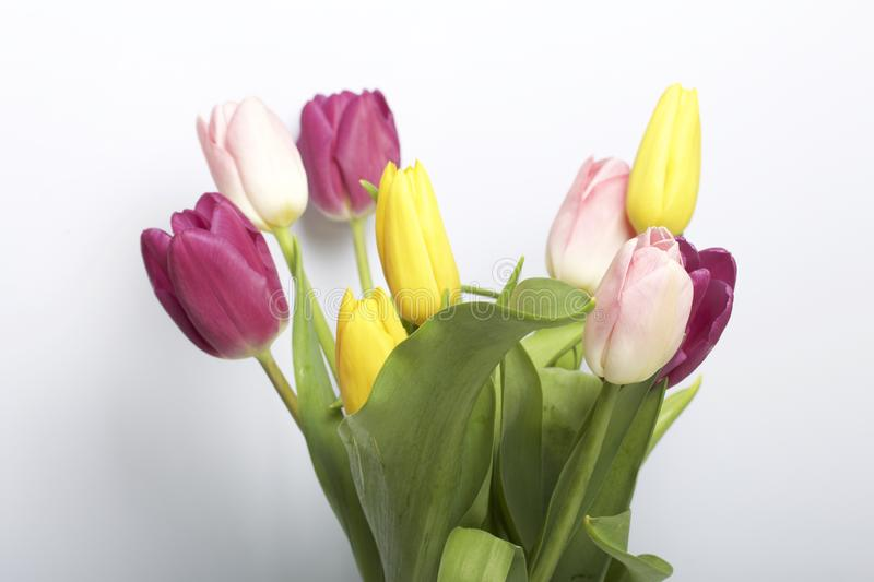 Spring flowers. A bouquet of tulips of different colors on a white background stock image