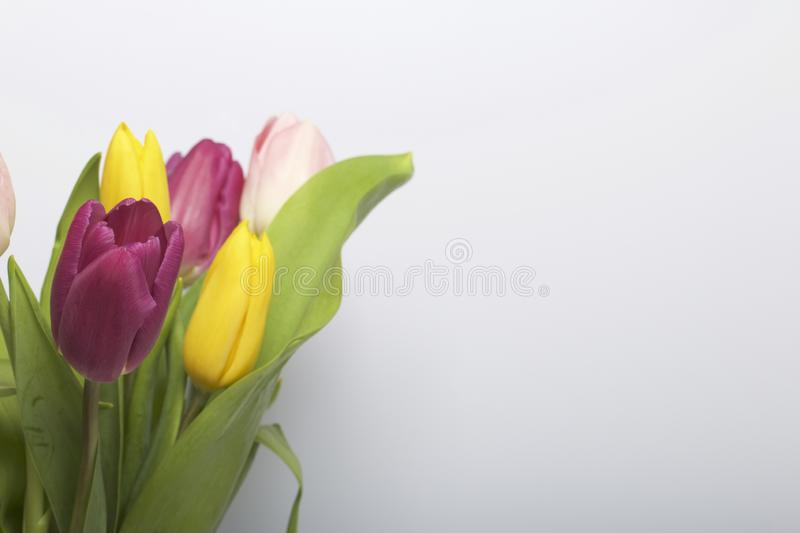 Spring flowers. A bouquet of tulips of different colors on a white background stock images