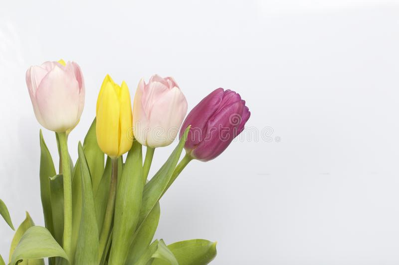 Spring flowers. A bouquet of tulips of different colors on a white background royalty free stock photo