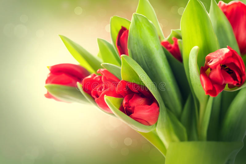 Spring flowers bunch stock image