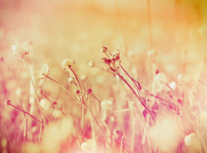 Spring flowers (buttercup flowers). Closeup, made with color filters royalty free stock images