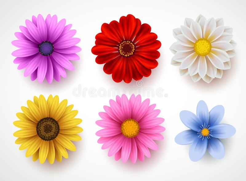 Spring flowers colorful vector set isolated in white background. Collection of daisy and sunflowers with various colors for spring season as graphic elements royalty free illustration