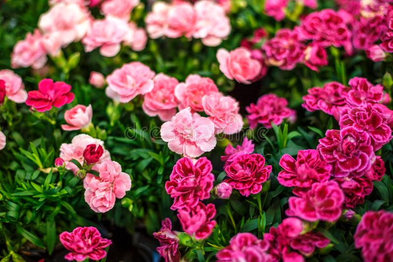 Plants For Spring Color