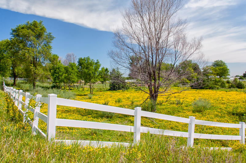 Download Spring Flowers In Fence Lined Pasture In Midwest Prairie Stock Photo - Image: 29602030