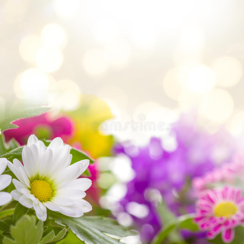 Download Spring Flowers Stock Illustration Of