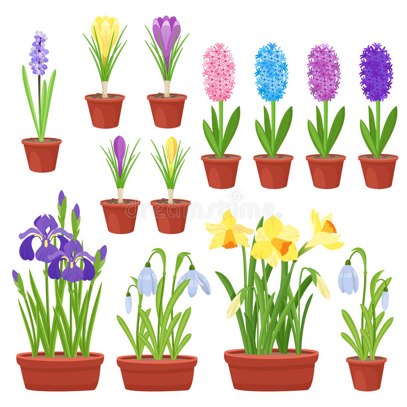 Spring flowers in flower pots. Irises, lilies of valley, tulips, narcissuses, crocuses and other primroses. Garden stock illustration