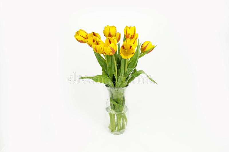 Spring Flowers. Fresh yellow Tulips Bouquet royalty free stock image