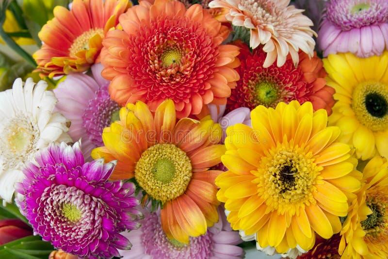 Spring flowers Gerbera macro stock images