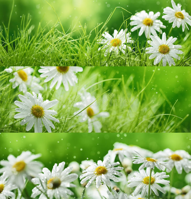 Spring flowers and grass stock image