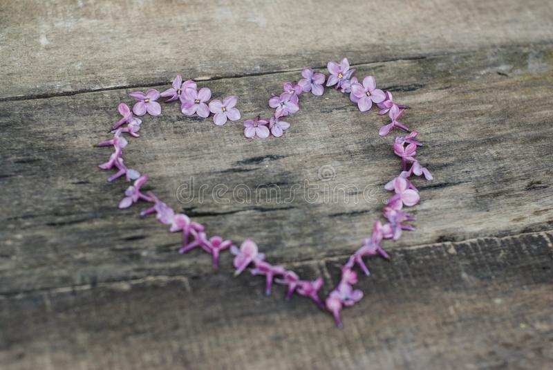 Spring flowers. Heart Shape from Lilac flowers Frame Heart Shape Textured rustic Gray wooden background. Top view, flat lay stock image