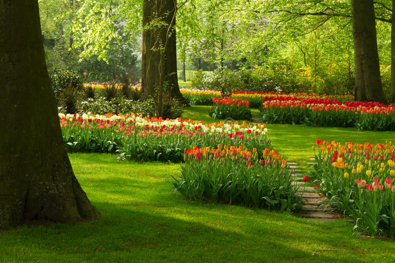 Spring flowers in holland park. Colorful green lawn and spring flowers in holland park Keukenhof, Netherlands royalty free stock photos