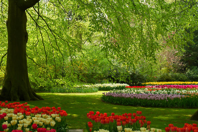 Spring flowers in holland park. Colorful green tree and spring flowers in holland park Keukenhof, Netherlands royalty free stock photography