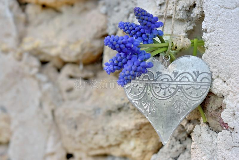 Spring flowers and  iron heart hung on a wall royalty free stock photography