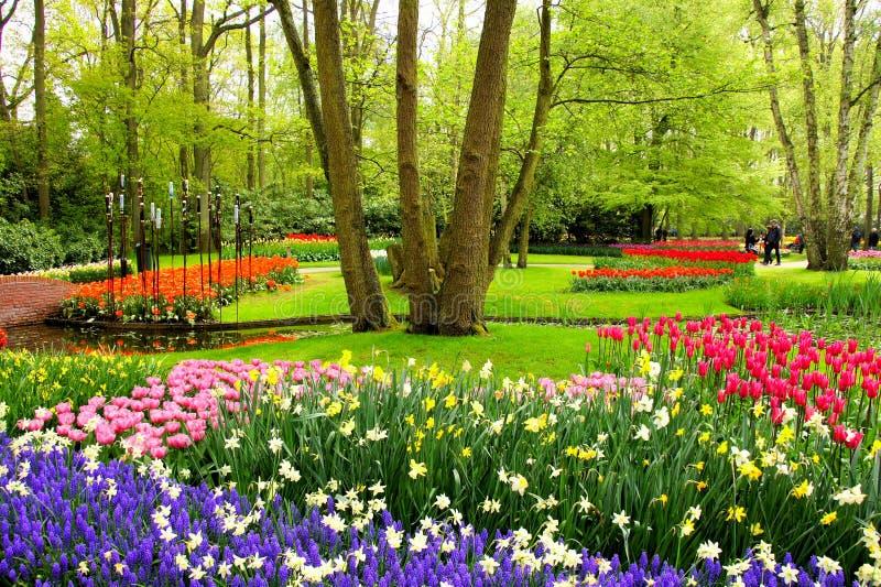 Spring flowers, Keukenhof Gardens stock photo