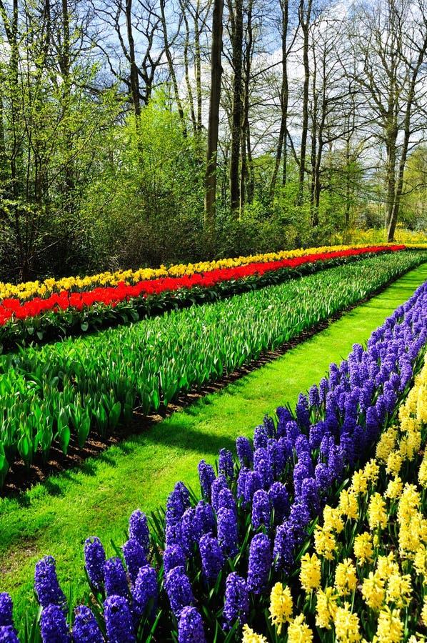 Spring flowers in Keukenhof park. Beautiful spring flowers in Keukenhof park in Netherlands (Holland royalty free stock images