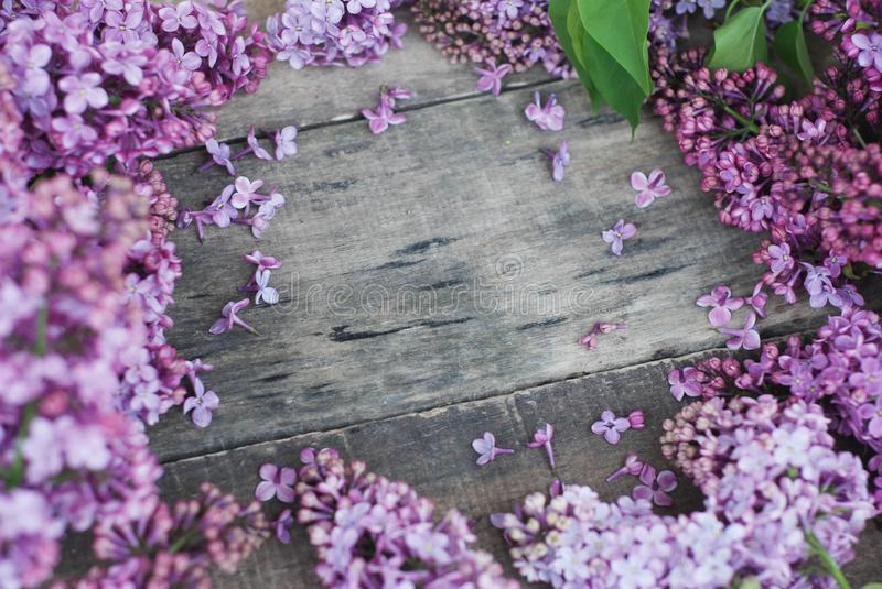 Spring flowers. Lilac flowers Frame on Rustic Textured Gray wooden background. Top view, flat lay stock images