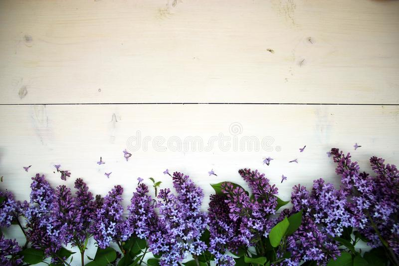 Spring flowers. Lilac flowers on white wooden background royalty free stock photo