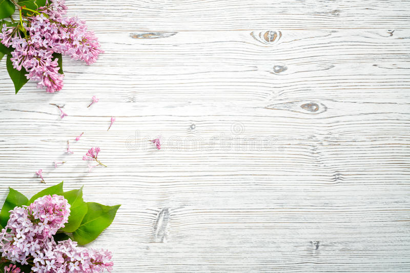 Spring flowers. Lilac flowers on white wooden background. Top view, flat lay, copy space. royalty free stock photo