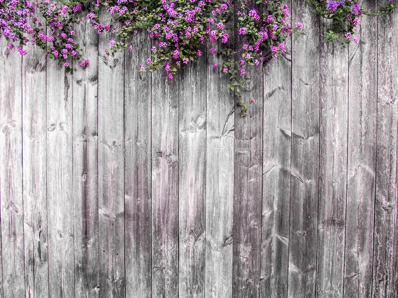 Spring flowers. Lilac flowers on white dark wooden background.nature concept idea summer spring stock photos