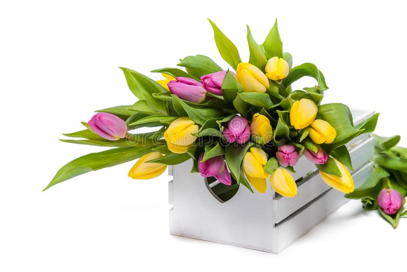 Bouquet of multicolored tulips in a white wooden box on a white background stock image