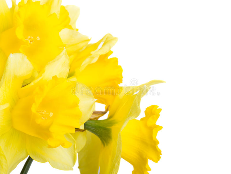 Download Spring flowers narcissus stock photo. Image of botany - 38620212