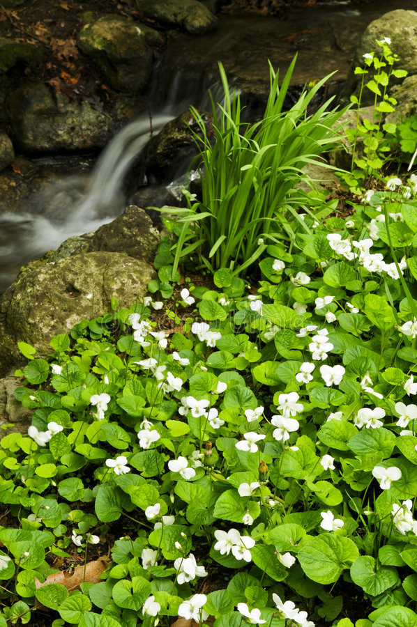 Download Spring Flowers Near Creek Stock Photography - Image: 7572192