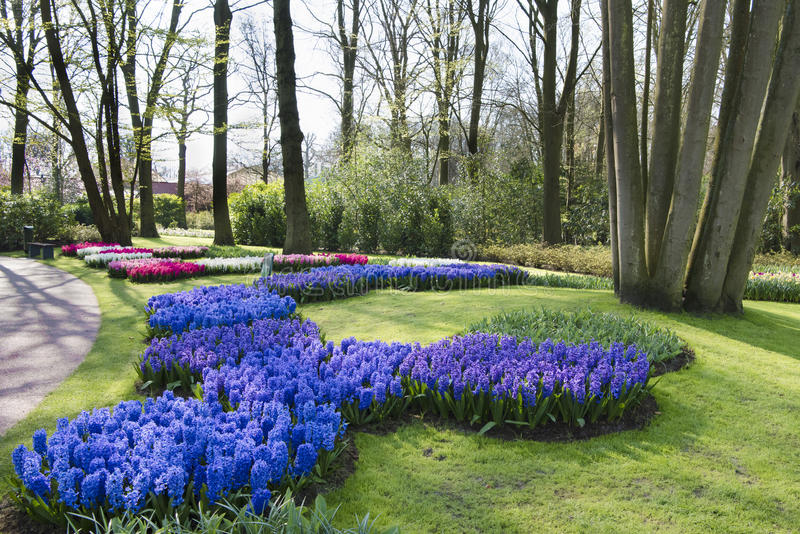 Spring flowers in park royalty free stock image