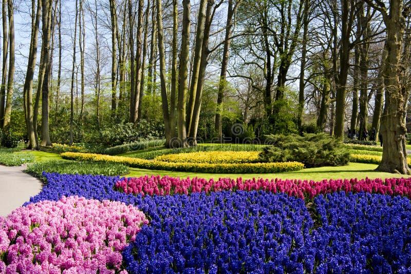 Spring flowers in Keukenhof Park royalty free stock photography