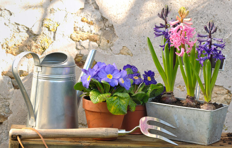 Spring flowers stock image