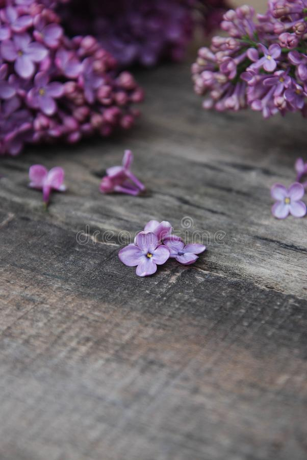 Spring flowers. Purple Lilac flowers Frame on Rustic Textured Gray wooden background. Top view, flat lay stock photography