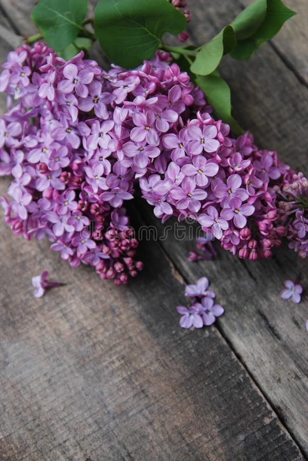 Spring flowers. Purple Lilac flowers Frame on Rustic Textured Gray wooden background. Top view, flat lay royalty free stock images