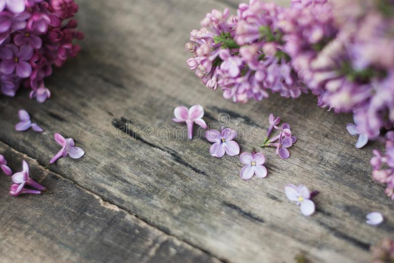 Spring flowers. Purple Lilac flowers Frame on Rustic Textured Gray wooden background. Top view, flat lay stock image