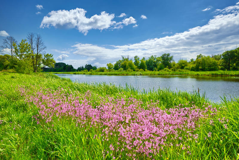 Spring flowers river landscape blue sky clouds countryside. Spring summer flowers river landscape blue sky clouds countryside stock photography