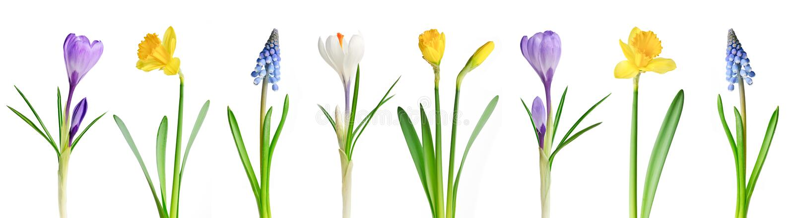 Spring flowers in a row royalty free stock images