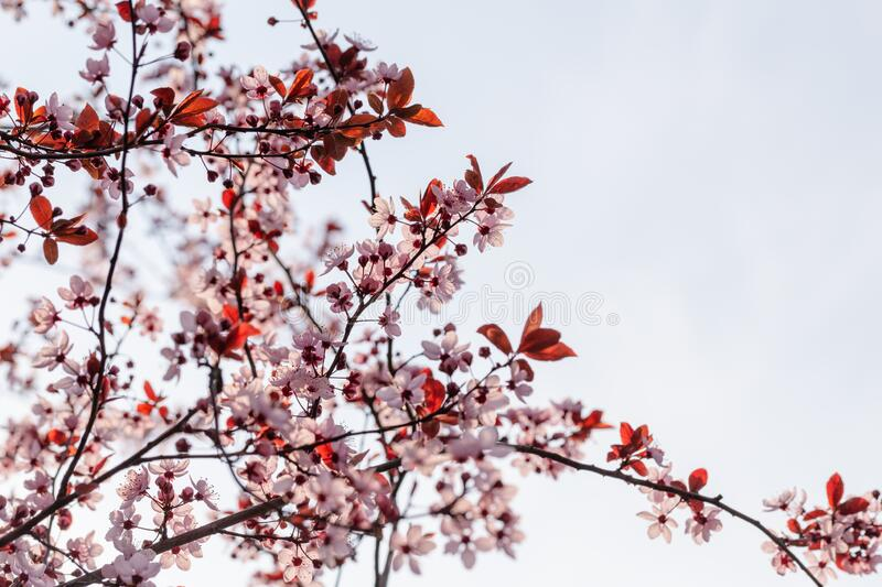 Spring flowers. stock photography